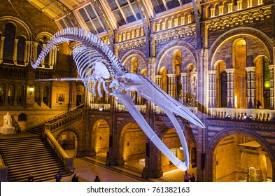 LONDON- NOVEMBER, 2017: The Blue Whale Skeleton (Hope) in the main entrance hall of the Natural History Museum in Kensington, London.