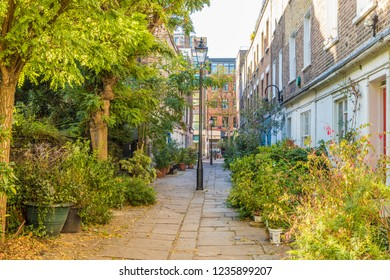 London. November 2018. A view of Colville Place and its plants in London