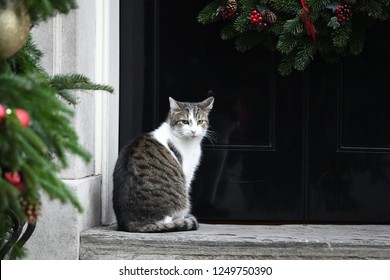 London, UK. 04 December, 2018. Larry the Cat, Chief Mouser, arrives at the weekly Cabinet Meeting, 10 Downing Street.