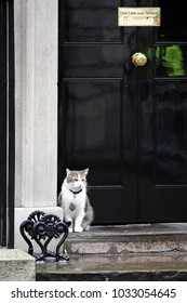 London, UK. 08 March, 2017. Larry Chief Mouser to the Cabinet Office garding Number 10, Dowing Street.