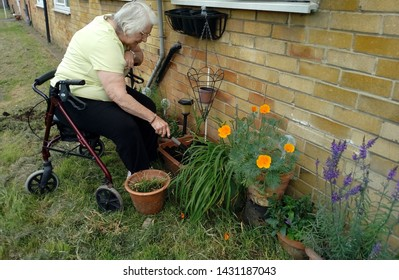 LONDON/ UK- 18th June 2019: Lady pensioner attended her small garden, in summer sunshine.