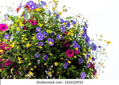 London, UK hanging flower basket on lamp post closeup with nobody in Victoria or Pimlico on sunny summer day colorful petals with purple and yellow plants