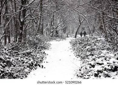 London, UK â?? Jan 20, 2013 :  People enjoying a winter stroll in a heavy fall of snow on Wandsworth Common