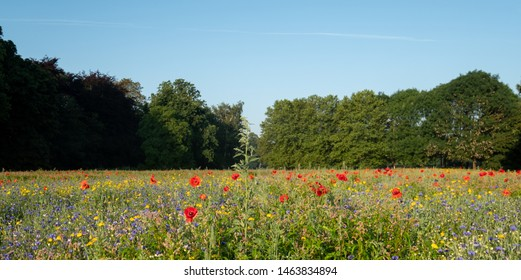 LONDON UK. July 2019. Colourful wild flowers, photographed during the July 2019 heatwave in Gunnersbury Park, London UK.
