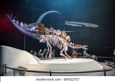 LONDON, UK - JULY 27, 2015: Natural History museum - The most complete stegosaurus