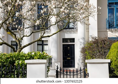 LONDON, UK - MARCH 11th, 2019: Magnolia tree is blooming in front of elegant building in Holland Park area in Central  London