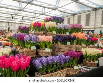 LONDON, UK - MAY 25, 2017: RHS Chelsea Flower Show 2017. Variegated hyacinths display.