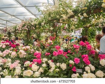 LONDON, UK - MAY 25, 2017: RHS Chelsea Flower Show 2017. Visitors observing variegated roses display.