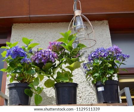 London Uk May 28 2018 Flowers Stock Photo Edit Now 1129511339