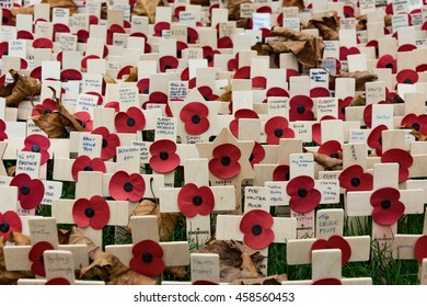 LONDON, UK - NOV 11: Poppies at the Westminster Abbey Garden of Remembrance, on Nov 11, 2015 in London UK. Members of the armed forces who lost their lives in World wars and other conflicts worldwide.