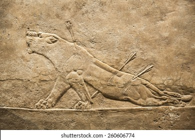 LONDON, UK - NOVEMBER 30, 2014: British museum. Dying lioness. King's hunt relief from Palace of Assurbanipal in Nineveh, Assyria
