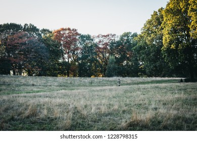 London, UK - October 27, 2018: Person walking through the field in Hampstead Heath at dusk. Hampstead Heath covers 320 hectares one of London's most popular open spaces.