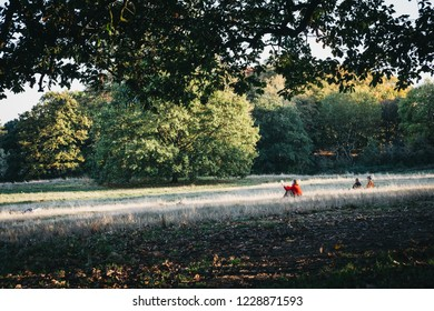 London, UK - October 27, 2018: Woman in a red jumper sitting on a grass, reading on a sunny day in Hampstead Heath. Hampstead Heath covers 320 hectares one of London's most popular open spaces.