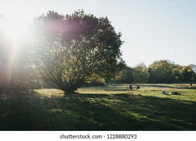 London, UK - October 27, 2018: People sitting on a grass, relaxing on a sunny day in Hampstead Heath. Hampstead Heath covers 320 hectares one of London's most popular open spaces.