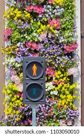 London, United Kingdom - 05 18 2018: Traffic light in London with floral background
