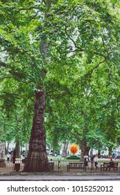 LONDON, UNITED KINGDOM - August 2nd, 2014: park with greenery, benches and sculptures in Berkeley Square in London city centre