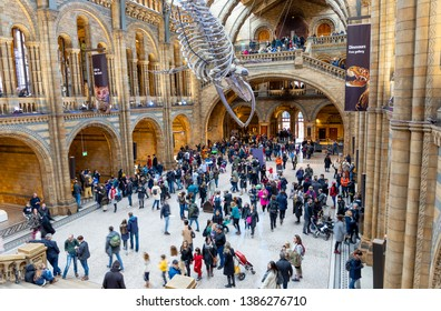 LONDON, UNITED KINGDOM - JANUARY 3: The  Natural History Museum on January 3, 2019 in London. It is a museum that exhibits a vast range of specimens from various segments of natural history.