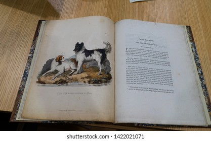 London / United Kingdom - March 20 2017: The page of a rare canine book in The Kennel Club. The Kennel Club Library in London is Europe's biggest dog library. Page depicts two dogs, female and male.