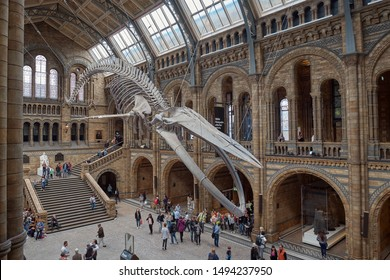 London, United Kingdom - May 24, 2018: Natural History museum, blue whale skeleton.