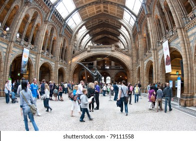 LONDON, UNITED KINGDOM - MAY 31: Interior view of Natural History Museum on May 31, 2011 in London, UK. The museum's collections comprise almost 70 million specimens from all parts of the world.