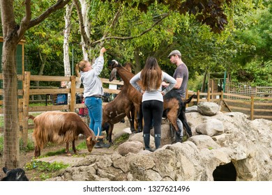 London, United Kingdom - September 08, 2018: Mudchute Farm. Largest city farm in London with a great collection of animals, near financial district Canary Wharf. Volunteers in goats enclosure