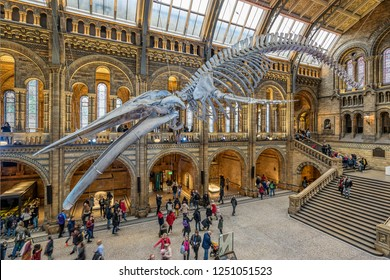 London,England on 1st Dec 2018: The Natural History museum is home to life and earth science specimens comprising some 80 million items of botany, entomology, mineralogy, paleontology and zoology