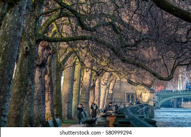 LONDON/UK - FEBRUARY 13 : Sunlit London Plane Trees next to the Houses of Parliament in London on February 13, 2017. Unidentified people