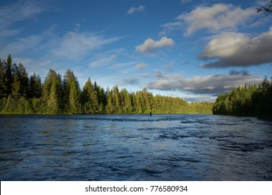 Lone Angler fly fishing for Grayling and Trout in a remote Swedish River in Scandinavia surrounded by endless forest on a sunny summer day with few clouds
