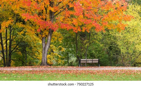 A lone bench along Eugene's Skinner Butte Park under colorful fall leaves.