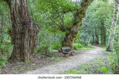 Lone bench under a forest canopy beside a demarcated hike route between Aguilar and Cervera del Rio Alhama in La Rioja, Spain. The lonely spot confers quietness, peacefulness and relaxation in nature