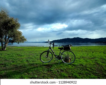 A lone bicycle parked in the middle of a vast field with a tree by the side, depicting the feelings of solitude and peacefulness