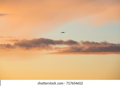 Lone bird flies into a beautiful sunset