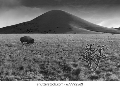 A lone bison grazes the high desert of New Mexico