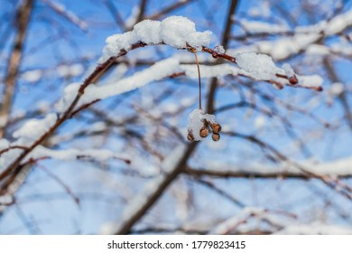 a lone branch with knapsacks under the snow