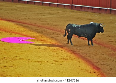 Lone bull with bullfighter's cape