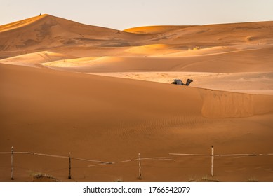 A lone camel walks along the sand dunes in Merzouga, Morocco