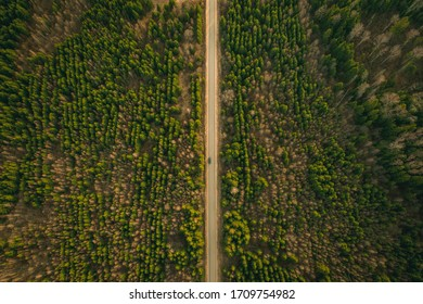 A lone car drives at high speed along a highway among trees planted in rows