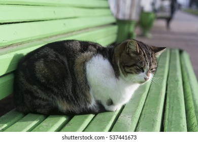 The lone cat on the bench in the Park.