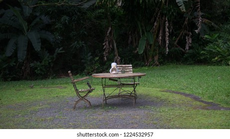 Lone chair and table in kailua