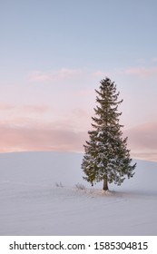 Lone Christmas Tree in winter snowscape