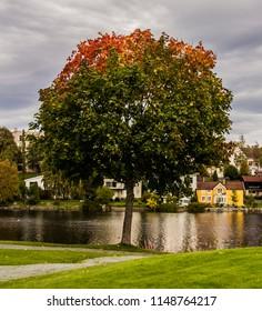 Lone  colorful autum-tree