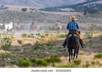 Lone cowboy rides out to round up horses