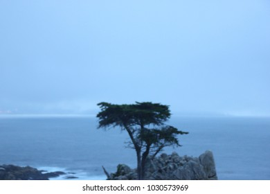 Lone Cypress view in late evening, 17 Mile Drive, California, USA, nearly 250 years old tree on hillside,  located between Cypress Point Golf Course and the Pebble Beach Golf Links.
