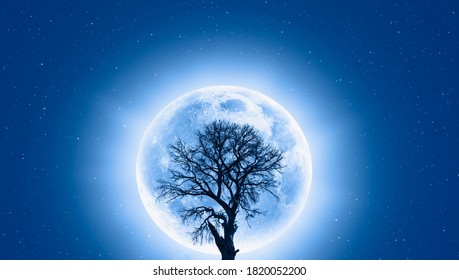 Lone dead tree with super full blue Moon