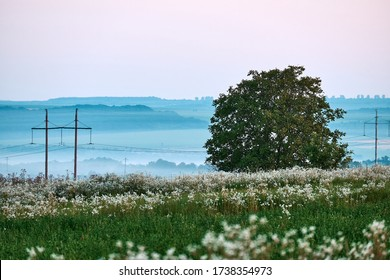 Lone deciduous tree in field of white wildflowers. Electric wires on poles cross flowering field. Background from misty hills in distance.