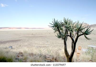 Lone desert adapted succulent tree in the vast expanse of the Namib desert,