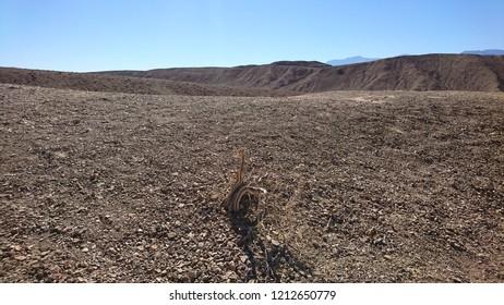 Lone dessicated tree in desolate Death Valley landscape - California