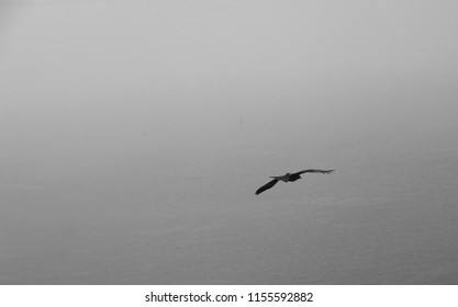 A lone eagle spreads it's wings as it glides over a vast sea. Photo in black and white.