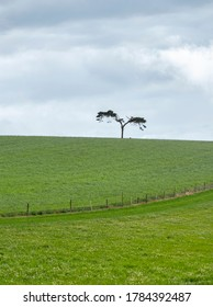 Lone fairy tree on the top of the green hill with dark clouds in the background