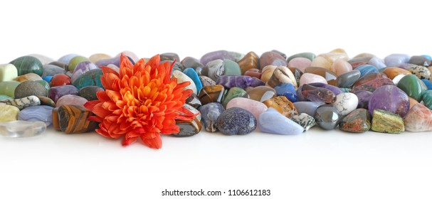Lone flower head and healing crystal header - Orange Flower head placed at the front of a a neat selection of multicoloured healing chakra stones against a white background